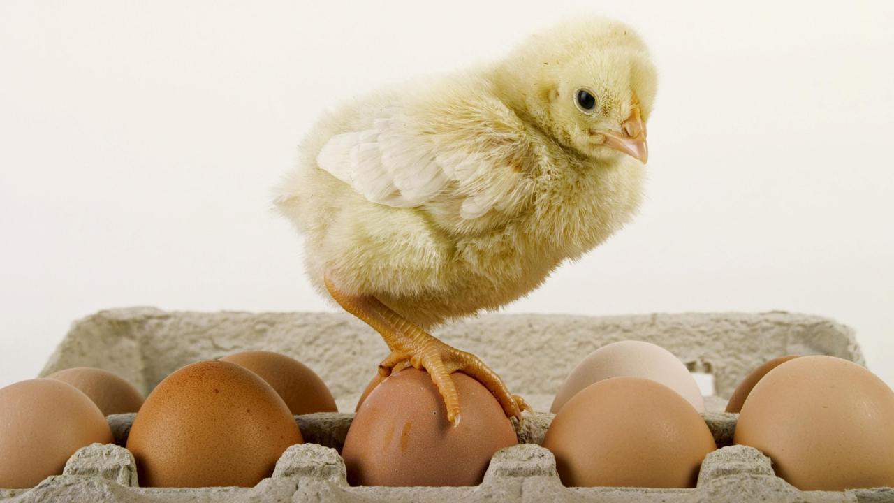 С яйца воду не пить: рекордное употребление этого продукта не страшно   Статьи   Известия